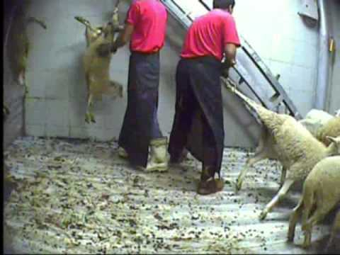 Turkish slaughterhouses 2011