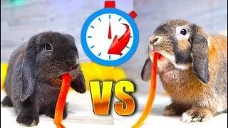 КТО ПЕРВЫЙ СЪЕСТ Эльза VS Лизун Свидание  Кроликов | Elli Di Pets