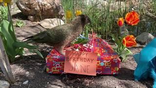 Happy Birthday Jane, from Milford!