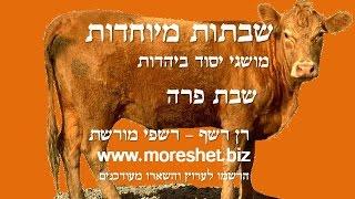 למי קראת פרה?! סרטון לפרה/לפרשה הכי אדומה בשנה. פרשת פרה - יש לי מושג