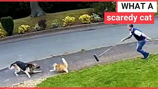 A couple's brave cat took on a German Shepherd - and left the huge dog running | SWNS TV