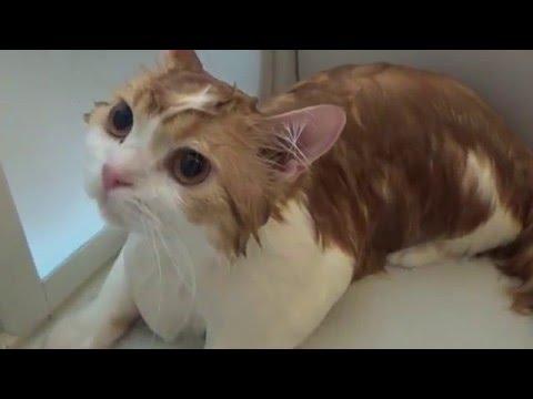 きなこ&こーちゃん&キティのシャンプップー