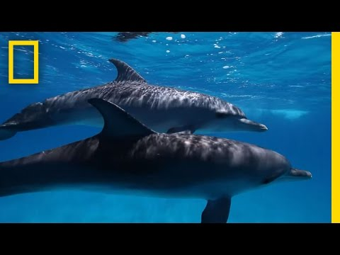 Here's What We Know About Dolphin Intelligence | National Ge