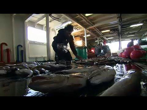 Ambientalistas denunciam acordo de pescas europeu