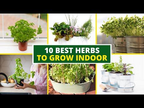 10 Best Herbs to Grow Indoor 🌿