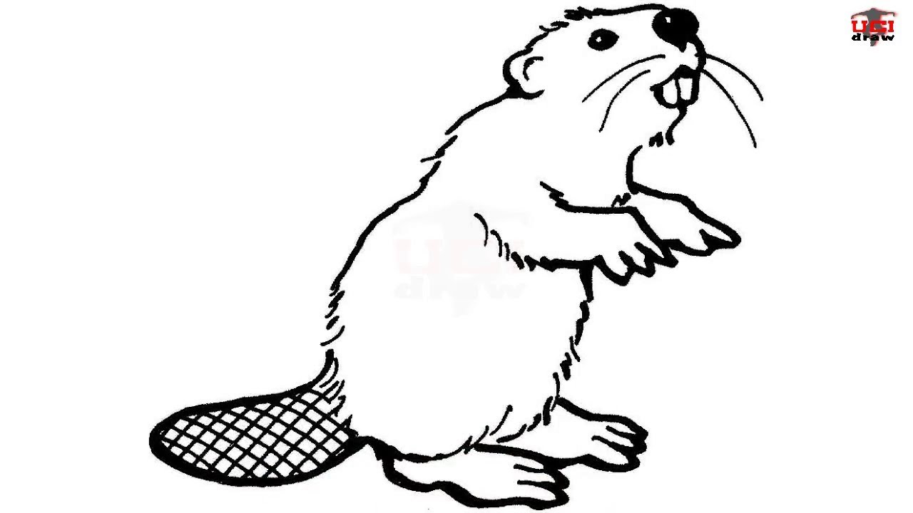 How to Draw a Beaver Step by Step Easy for Kids