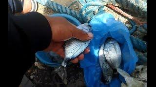 رحلة صيد اسماك الكحلة ( الصار  ) شرق الجزائر   Vlog 4