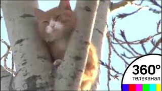 Пожарные в Тюмени спасли кота, просидевшего на дереве три дня