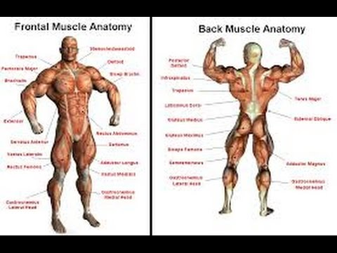 Muscle parts vs exercise - YouTube