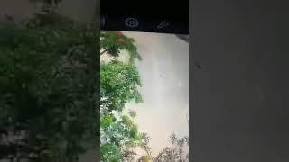 شاهد.. طالب يعذب الكلبة لوزة محبوبة الشارع حتى الموت