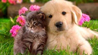 Говорящие животные эмоциональные поздравления с 8 марта - Funny talking animals
