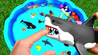 Learn Colors With Wild Zoo Animals Water Shark Toys For Kids