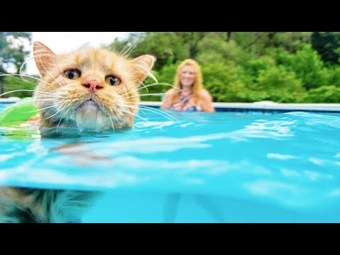 Funny Cats in Water Video Compilation 2020 [FUNNY PETS]