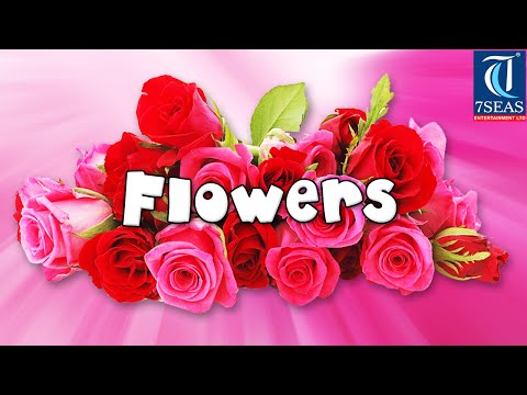 Learn Names of Flowers   Flower Names in Animation Video   Learning for Kids