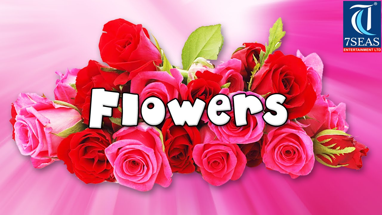 learn names of flowers  flower names in animation video, Beautiful flower
