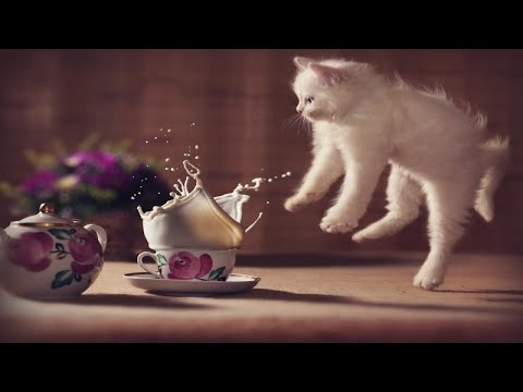 Startled Cats & Kittens | Funny Cats Getting Scared V3