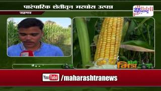Sheti Mitra, baby corn farming