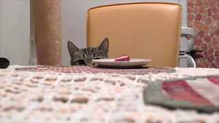 Смешные коты 2015 / Funny Cats 2015/Funny Cat Videos/Смешное видео про котов/смешное видео 2015