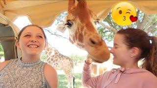 I Kissed a Giraffe 😘 (WK 332.4) | Bratayley