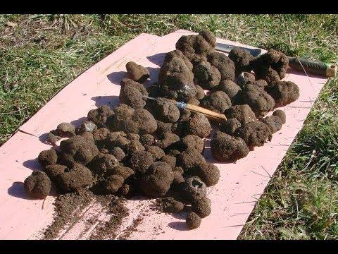 Вопрос: Как выращивают грибы в искусственных условиях?