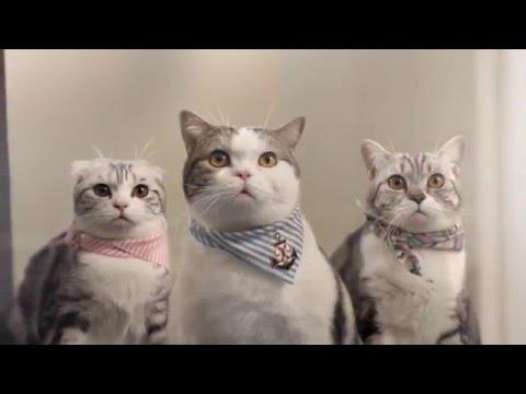 Mèo mập và đồng bọn - Quảng cáo Thái Lan hài hước và dễ thương!