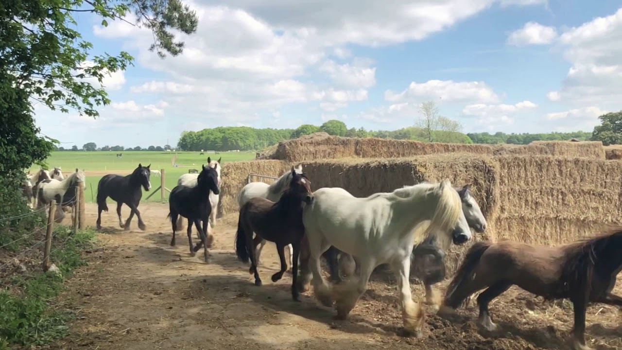 Hillside Animal Sanctuary Horses Before Going Out to Grass May 2019...