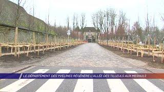 Yvelines | Le département des Yvelines régénère l'allée des tilleuls aux Mesnuls
