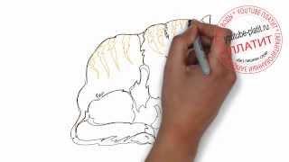 Как нарисовать взрослого кота карандашом поэтапно
