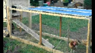Chicken Coops For Dummies | Info And Tips On Building Chicken Coops For Dummies