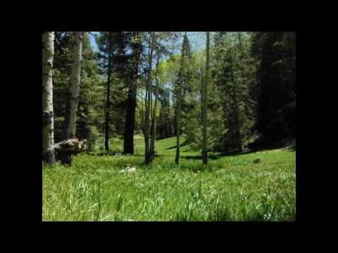 CHEAP LAND!!! Gorgeous Mountain Land EXTREME $$$ OPPORTUNITY!!! AWESOME PRICES
