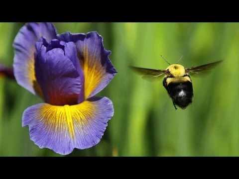 Eugene, Oregon Bans Bee Killing Pesticides