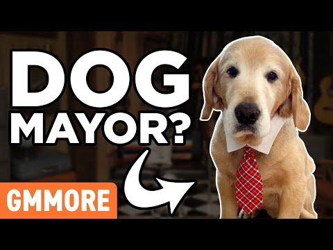 Animals That Ran For Political Office