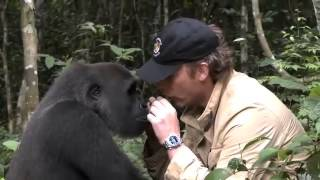 Gorilla ziet na 5 jaar zijn verzorger weer