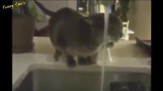 Коты в воде