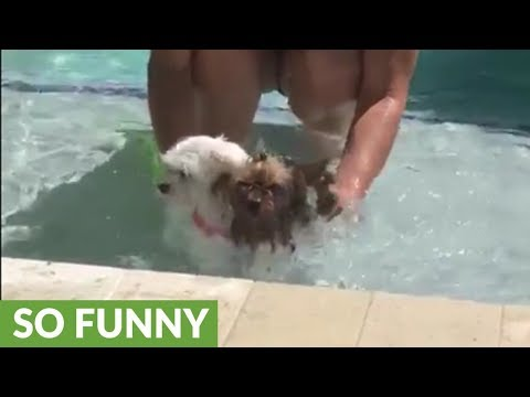 Dog in shallow standing water swims for her life