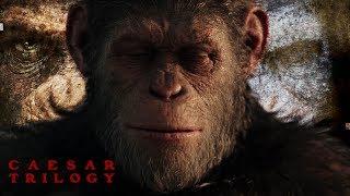 "Caesar Trilogy ""Montage 2011-2017"""