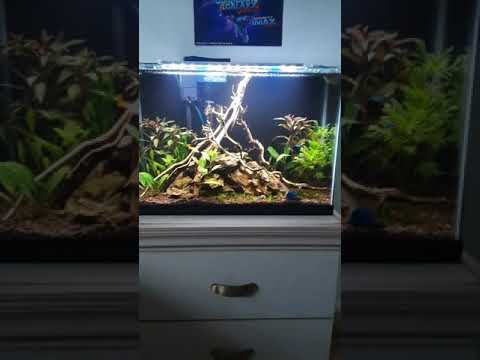 Planted Aquascape With Seachem Fluorite Co2 And Flourish Fert.