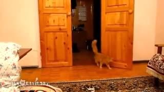 Нервный кот!!! смотреть до конца Nervous cat! watch until the end
