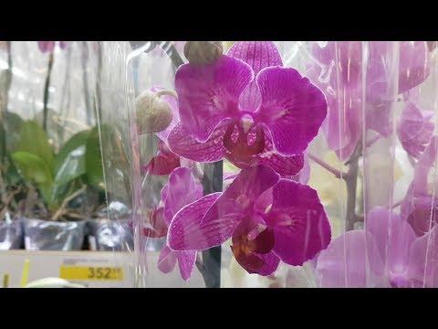 НОВЫЕ Орхидеи с названиями в LEROY MERLIN | ЛЕРУА МЕРЛЕН | Орхидея Orchid ORCHIDS ОРЕНБУРГ