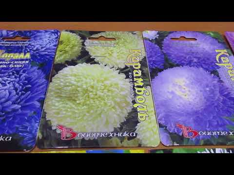 видео: посев цветов под зиму