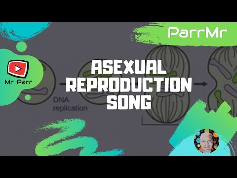 Asexual Reproduction Song