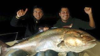 Türkiye Rekoru 63 kg Kuzu Avı ( Giant Amberjack )