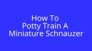 How To Potty Train A Miniatire Schnauzer | FREE MINI COURSE
