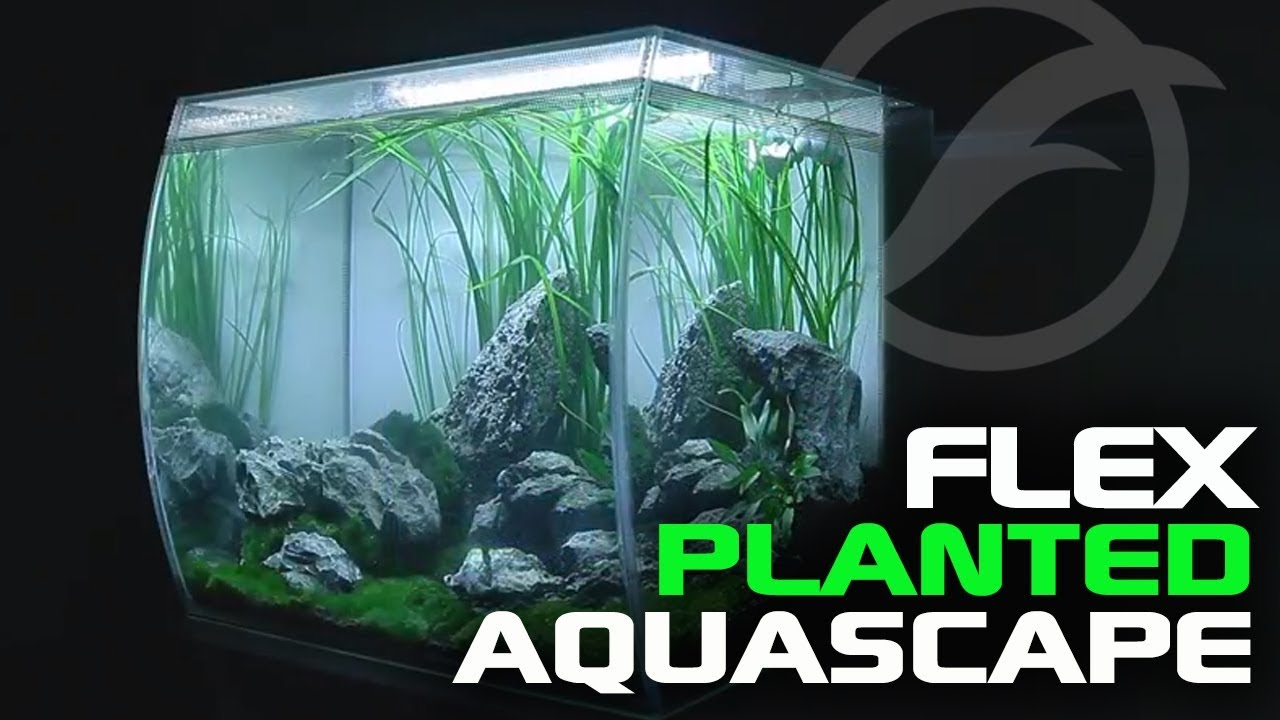 Planted Tank Aquascape Ft Fluval Flex Youtube