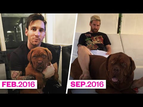 How tall and how heavy is Hulk, Leo Messi's dog? | Oh My Goal