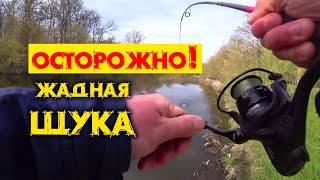 Щука активно клюет после нереста Рыбалка спиннингом на малой реке с берега