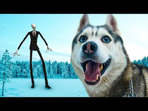 СЛЕНДЕРМЭН в реальной ЖИЗНИ!! (Хаски Бандит) Говорящая собака