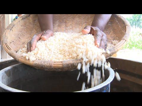 Maize - World Food Programme, Malawi