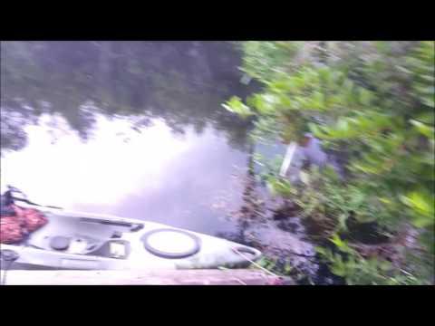 Kayaking the Okefenokee Swamp with Alligators