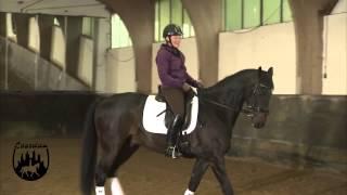 Loesdau Lessons: Basics mit Kati: Schenkelhilfe zur Verständigung mit dem Pferd